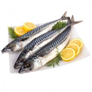 Риба Скумрия Замразена Нечистена Около 500 гр.